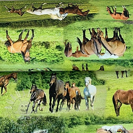 Dekostoff Horses in Meadow digital print