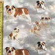 Jersey BIO English bulldog digital print
